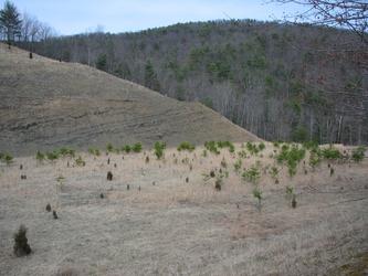 Barren Hills