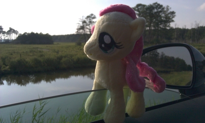 Chincoteague Fluttershy