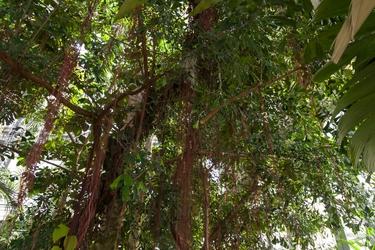Leafy Overhead