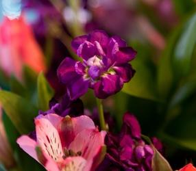 Flowers-3465