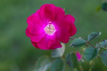 Flowers-3473