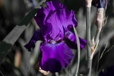 Flowers-3577