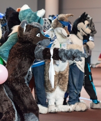 Fursuit Games - A Challenge
