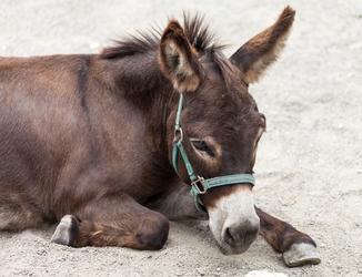 Hot ...Donkey