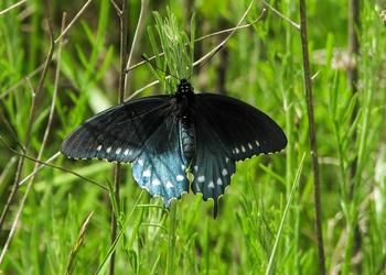 Lakeside Butterfly