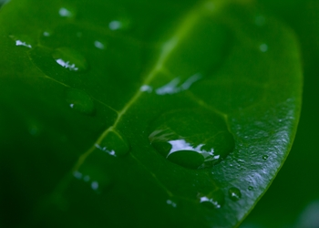 Large Raindrop