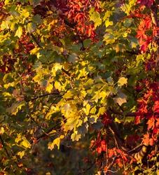 Leafy Sunset