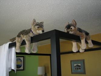 Monorail Wuffs