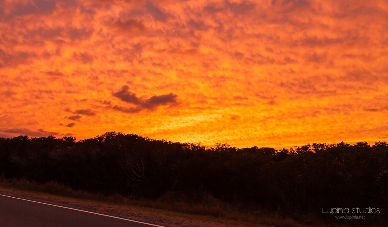 Orange Sky Over Ponies