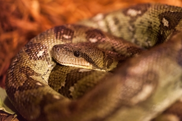 Snake Pile