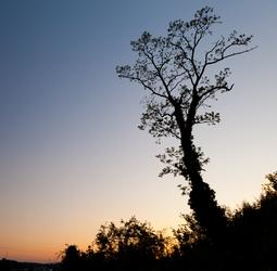 Troy Hill Tree