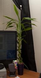 Bamboo (2011)