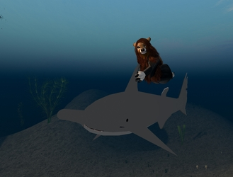 Shark-Riding