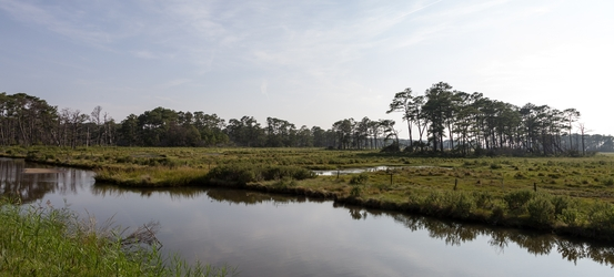 Chincoteague Landscape