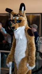 Fursuit Parade - Unknown Roo