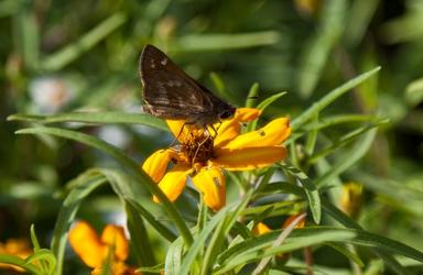 Moth on Flower