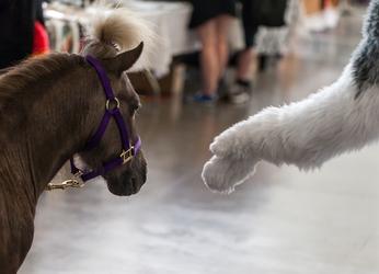 Pony Meets Paw