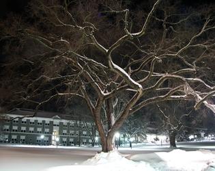Snowmageddon2009-6862