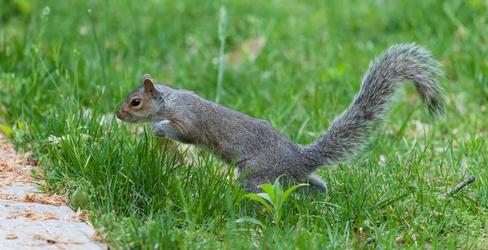 Zippy Squirrel